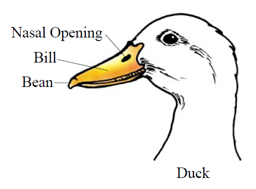 Diagram of duck head