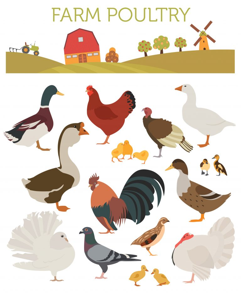 iagram of different species of poultry