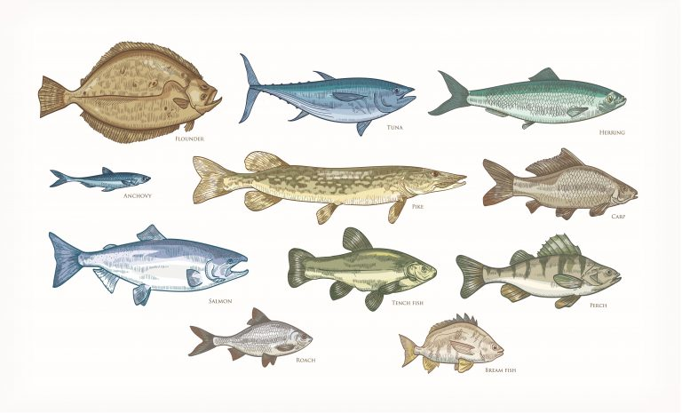 Diagrams of different types of fish