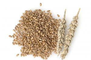 Wheat plant and seeds