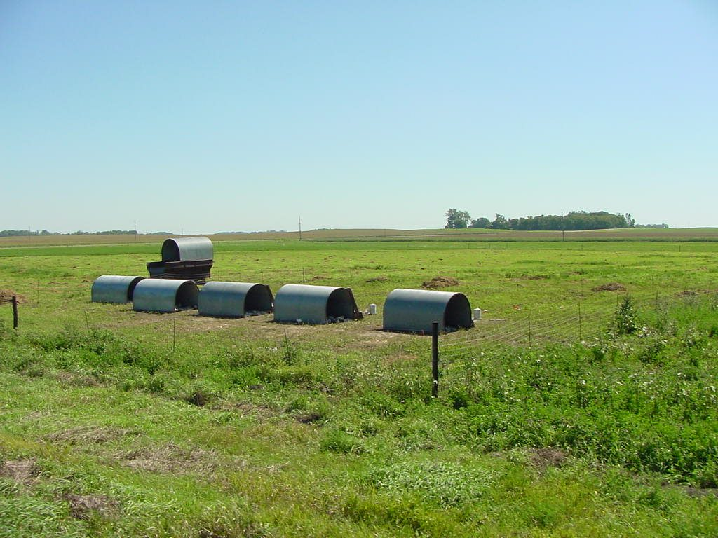 Pasture poultry huts and feed wagon