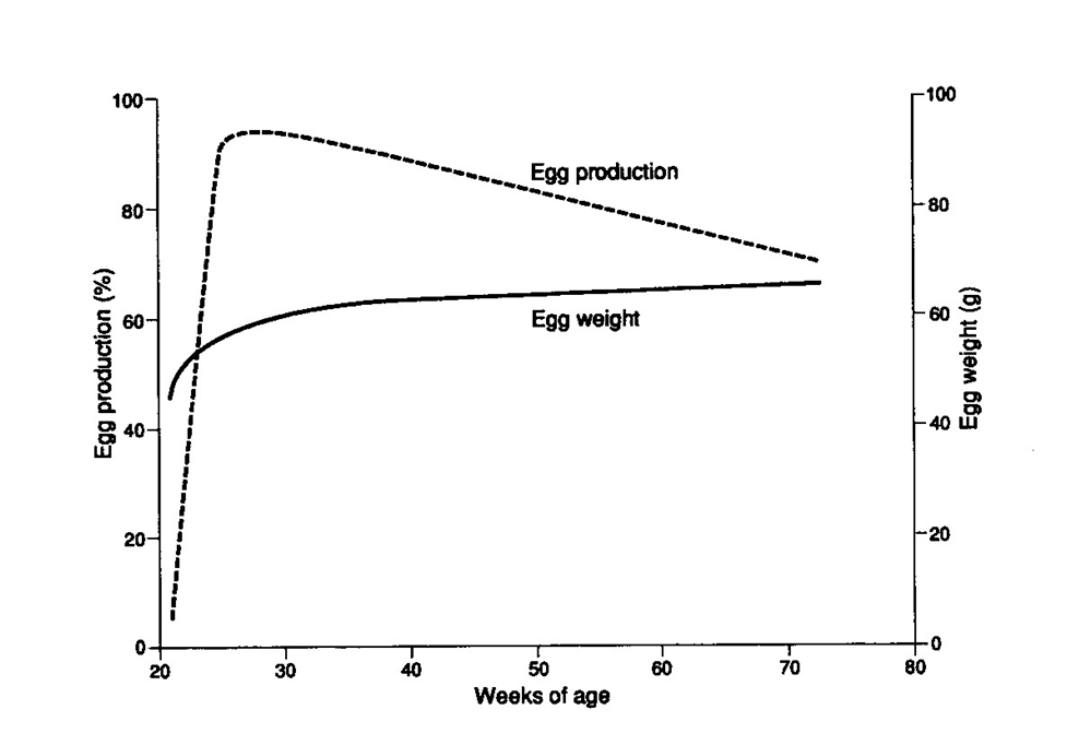 Egg Production curve