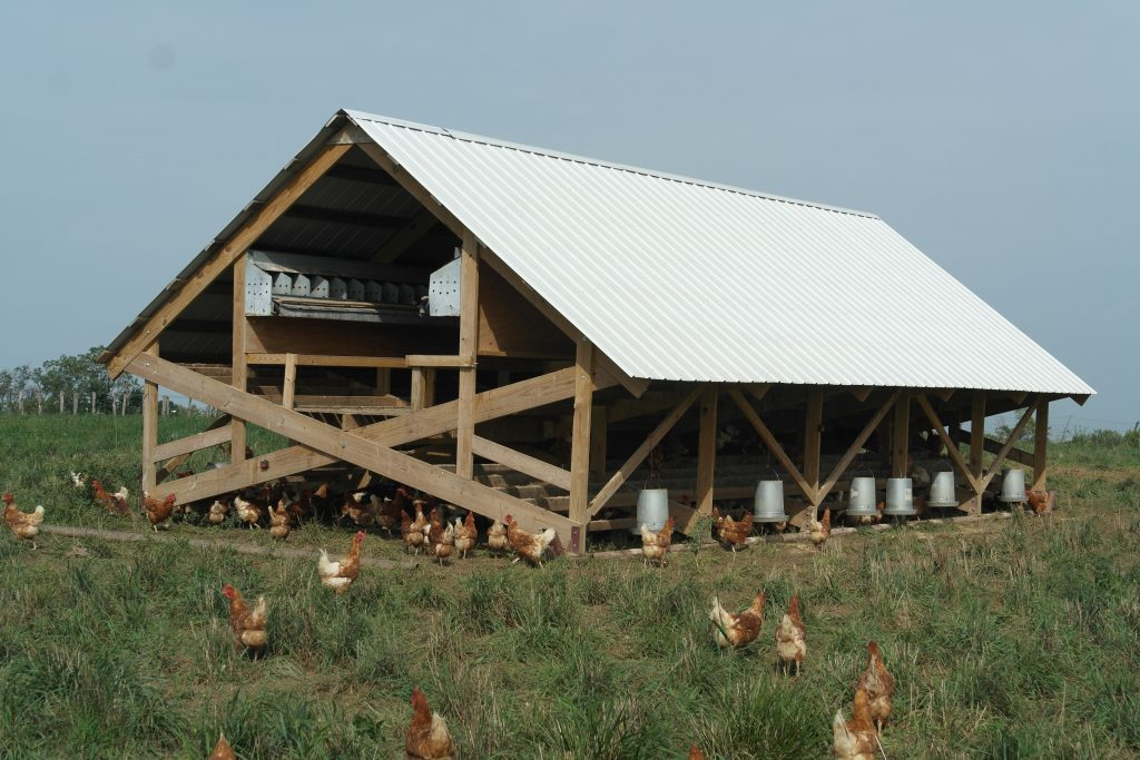 Small-scale commercial free-range egg production facility
